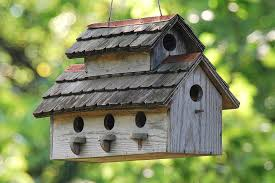house building tips bird house building tips and resources