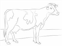 little cow coloring page for kids animal pages pictures of cows to