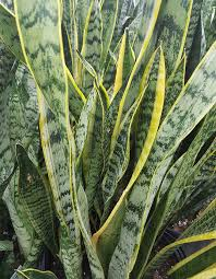 Tropical Plants Pictures - tropical house plants and trees tropical flowers terra