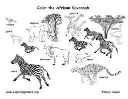 african animals coloring page free download