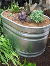 Galvanized Trough Planter by Galvainized Water Trough For Container Garden Gardening