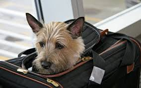 10 travel tips for flying with your dog