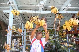When To Travel To Cuba When You Travel To Cuba You Eat All The Fruit De Su Mama