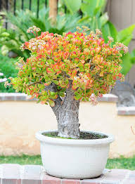 Beautiful House Plants Love These Beautiful Monsters Plants Galore Pinterest Jade