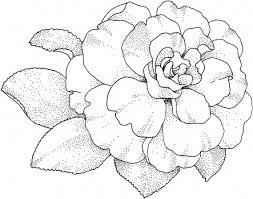 camellia blossom digis flowers pinterest camellia tattoo