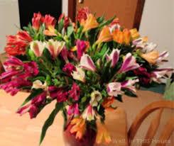 peruvian lilies 100 alstromeria blooms from proflowers still going strong after