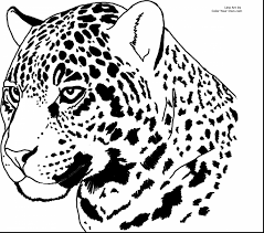 outstanding jaguar coloring pages printable with jaguar coloring