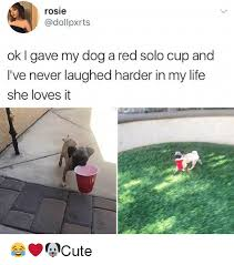 Red Solo Cup Meme - rosie ok i gave my dog a red solo cup and i ve never laughed