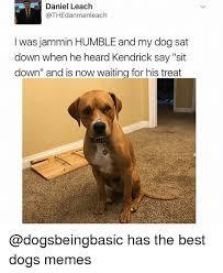 Orange Dog Meme - daniel leach was jammin humble and my dog sat down when he heard