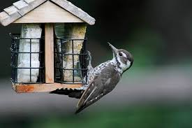 what to feed birds in winter care2 healthy living