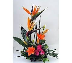 s paradise in naples fl driftwood garden center florist
