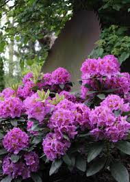 Types Of Garden Flowers - design a woodland garden shade ideas types of gardens ferns idolza