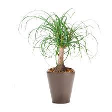 424 best indoor plants images on pinterest indoor plants indoor