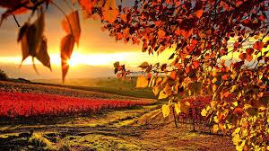 beautiful autumn hd wallpapers 1920x1080 autumn 1920x1080