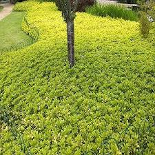 Backyard Ground Cover Ideas 58 Best Landscaping Garden Ideas Images On Pinterest Backyard