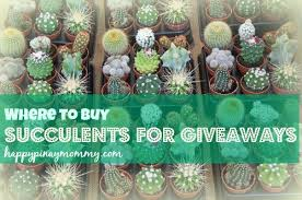 where to buy succulents for giveaways in the philippines happy
