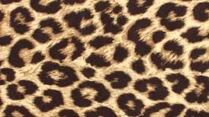 animal print nail art designs pinterest test youtube idolza