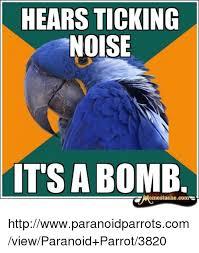 Paranoid Parrot Memes - 25 best memes about paranoid parrot paranoid parrot memes