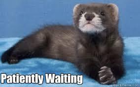 Meme Waiting - patiently waiting patient otter quickmeme