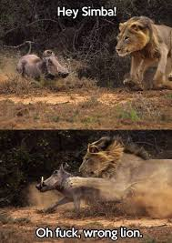Lion King Meme - best lion king memes gametraders usa