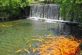 garden pond landscape ideas there is a very large fish pond
