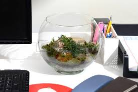 small cactus in glass on office desk make be close to nature