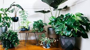 8 Houseplants That Can Survive by Ultimate Guide To Indoor Plants Sunset