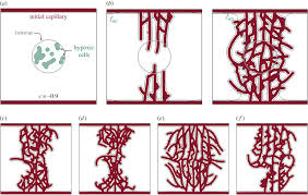 a mathematical model of tumour angiogenesis growth regression