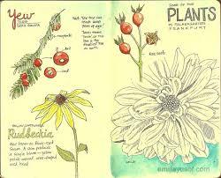 moleskine sketches of botanical plants at palmengarten emilatopia