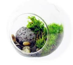 sealed bottle garden terrarium design amusing terrarium bottle terrarium in a bottle