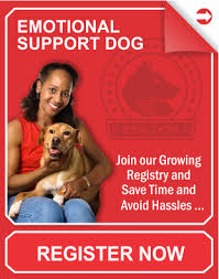 Comfort Dogs Certification Service Dog Vest Emotional Dog Vest Therapy Dog Vest And Id Card Kits