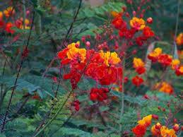 tucson flowers arizona picture of tucson arizona tripadvisor