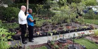 in florida front yard veggie patch yields bitter lawsuit mnn