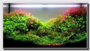 Aquascaping Techniques Aquascape Of The Month March 2009