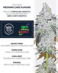 wedding cake genetics compound genetics compound genetics legend orange apricot f2