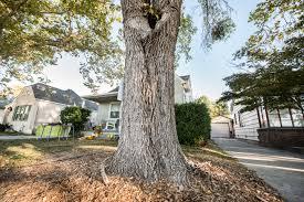 White Oak Tree Bark Help An Oak Tree Tolerate Severe Drought Green Blog Anr Blogs
