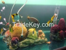 live marine ornamental fish by bluearrow limited maldives