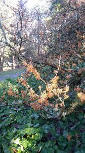 the winter garden u2014 swansons nursery seattle u0027s favorite garden