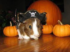 Hamster Halloween Costume Hamster Hotdog Pet Halloween Costumes La Lamarmotacafe