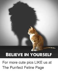 Purrrfect Meme - believe in yourself for more cute pics like us at the purrfect