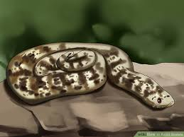 How To Avoid Snakes In Backyard 7 Ways To Avoid Snakes Wikihow