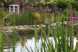 Natural Swimming Pool Water World A Natural Swimming Pool Lily Pads Included Gardenista