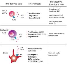 the sixth sense hematopoietic stem cells detect danger through