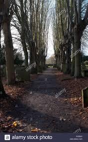avenue of lime trees st nicholas churchyard kenilworth uk