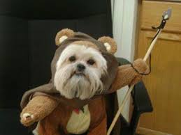 Dog Halloween Costumes 105 Pet Cosplay U0026 Costumes Images Cosplay