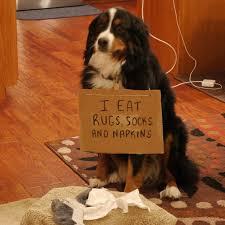 107 best hall of shame images on pinterest dog shaming funny