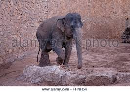 Tisch Family Zoological Gardens - israel jerusalem biblical zoo family zoological gardens group of