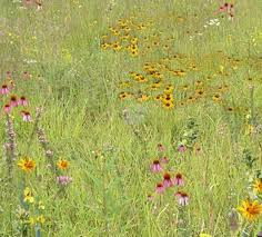 wildlife habitat mixes roundstone native seed company