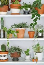 Plants Of Season 4 Joanna by 10 Houseplants That Actually Clean The Air You Breathe Plants