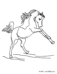 horse picture coloring pages hellokids
